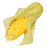 Fresh Uncooked Sweet Corn Cob Royalty Free Stock Image