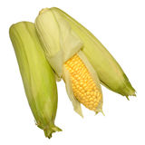 Fresh Uncooked Sweet Corn Cobs Royalty Free Stock Images