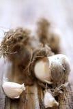 Fresh unpeeled garlic Stock Image