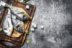 Fresh unprepared dorado fish on a cutting board. On a rustic background Royalty Free Stock Photos