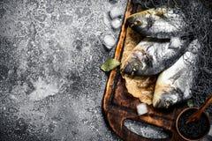Fresh unprepared dorado fish on a cutting board. On a rustic background Stock Photo