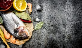 Fresh unprepared Dorado fish with sauce and spices. On a rustic background Stock Photos