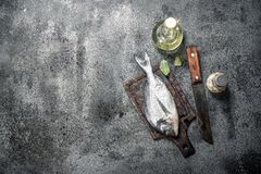 Fresh unprepared Dorado fish with white wine. On a rustic background Royalty Free Stock Photos