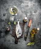 Fresh unprepared Dorado fish with white wine. On a rustic background Royalty Free Stock Images