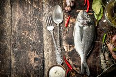 Fresh unprepared Dorado fish with wine, herbs and spices. On a wooden background Stock Photos
