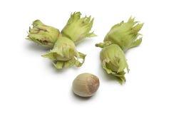 Fresh unripe hazelnuts Royalty Free Stock Photos