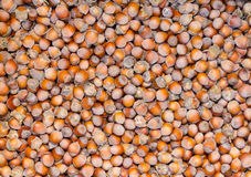 Fresh untreated in the skin of the hazelnuts. Stock Photo