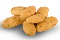 Fresh unwashed potatoes Royalty Free Stock Photo