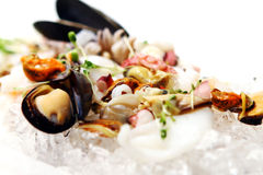 Fresh various seafood served on ice Stock Photos