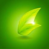 Fresh Vector Leaves Stock Image
