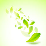 Fresh Vector Leaves Royalty Free Stock Photos
