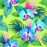 Fresh vector orchids pattern Stock Photography