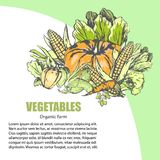 Fresh Vegetable Assortment with Text Information. Fresh vegetables assortment with text information nearby. Vector colorful poster in graphic design of organic Stock Images