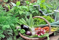 Fresh vegetable in basket Royalty Free Stock Photography