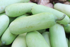 Fresh vegetable. Benincasa hispida in market Royalty Free Stock Images