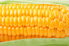 Fresh vegetable corn texture stock images