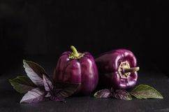 Fresh vegetable. Dark purple peppers with leaves of basil. On black stone, black background royalty free stock photography