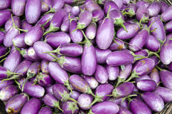 Fresh vegetable eggplant in asian market, India Royalty Free Stock Photos