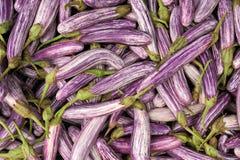 Fresh vegetable eggplant Royalty Free Stock Image
