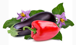 Fresh vegetable eggplants and pepper isolated on white. Background Royalty Free Stock Images