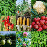 Fresh vegetable and fruit collection Stock Image