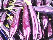The fresh vegetable from garden concept. Many fresh purple eggpl Stock Images