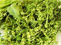 Fresh vegetable green Neem Tree Stock Images