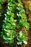 Fresh vegetable on ground Stock Photo