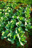 Fresh vegetable on ground Stock Image