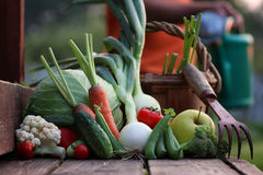 Fresh vegetable harvest nature outdoor Stock Images