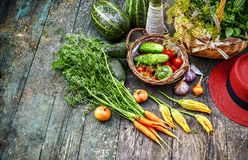 Fresh vegetable and herb at old wooden. Table with garden tools Summery still life carrot red hat Top view stock photos
