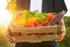 Fresh vegetable harvest at sunset background. Fresh vegetable just harvest from organic farm are carrying by farmer at beautiful sunset Stock Images