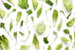 Fresh vegetable leaf Stock Photography