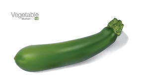 Fresh vegetable marrow Royalty Free Stock Photo