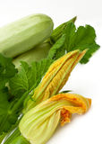 Fresh vegetable marrow with green leaf Stock Image