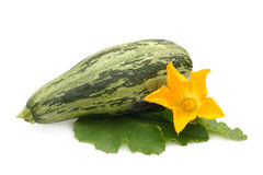 Fresh vegetable marrow with leaf and flower Stock Images
