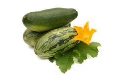 Fresh vegetable marrow with leaf and flower Royalty Free Stock Image