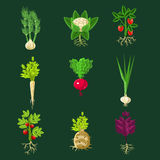 Fresh Vegetable Plants With Roots Collection Stock Image