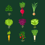 Fresh Vegetable Plants With Roots Set Stock Images