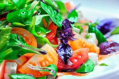 Fresh vegetable salad. Red and yellow tomatoes. Basil, goat cheese. Concept: healthy food Royalty Free Stock Photography