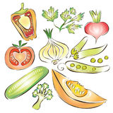 Fresh vegetable set. Pepper, cucumber, onion royalty free illustration