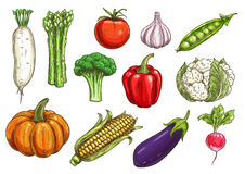 Fresh vegetable sketches for food theme design Stock Photography