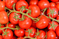 Fresh vegetable, tomato Royalty Free Stock Photos