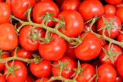 Fresh vegetable, tomato Royalty Free Stock Photos