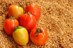 Fresh vegetable -Tomato Stock Image