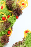 Fresh vegetable. Variety of fresh vegetable on a white background Stock Photos
