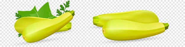 Fresh vegetable Zucchini decorated with green leaf and flower. Realistic vector on transparent background, 3d. Illustration vector illustration