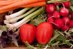 Fresh vegetables. Fresh carrots, radishes, scallions, tomatoes and greens Royalty Free Stock Photos