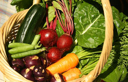 Fresh vegetables. A variety of freshly harvested garden vegetables, rich in antioxidents Royalty Free Stock Image