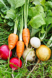 Fresh vegetables. On the grass Royalty Free Stock Photography